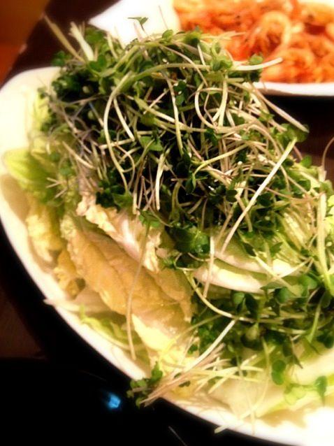 白菜、生で食べるの旨い! - 44件のもぐもぐ - 白菜のサラダ シーザードレッシングで by tetsu0225