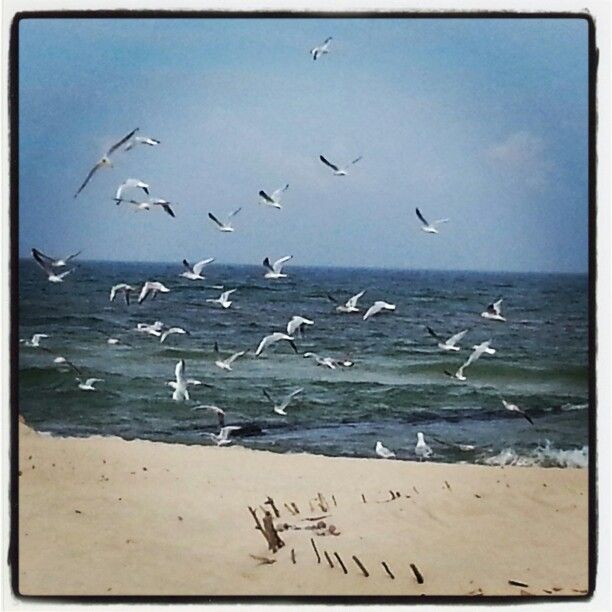 Plaża Sarbinowo
