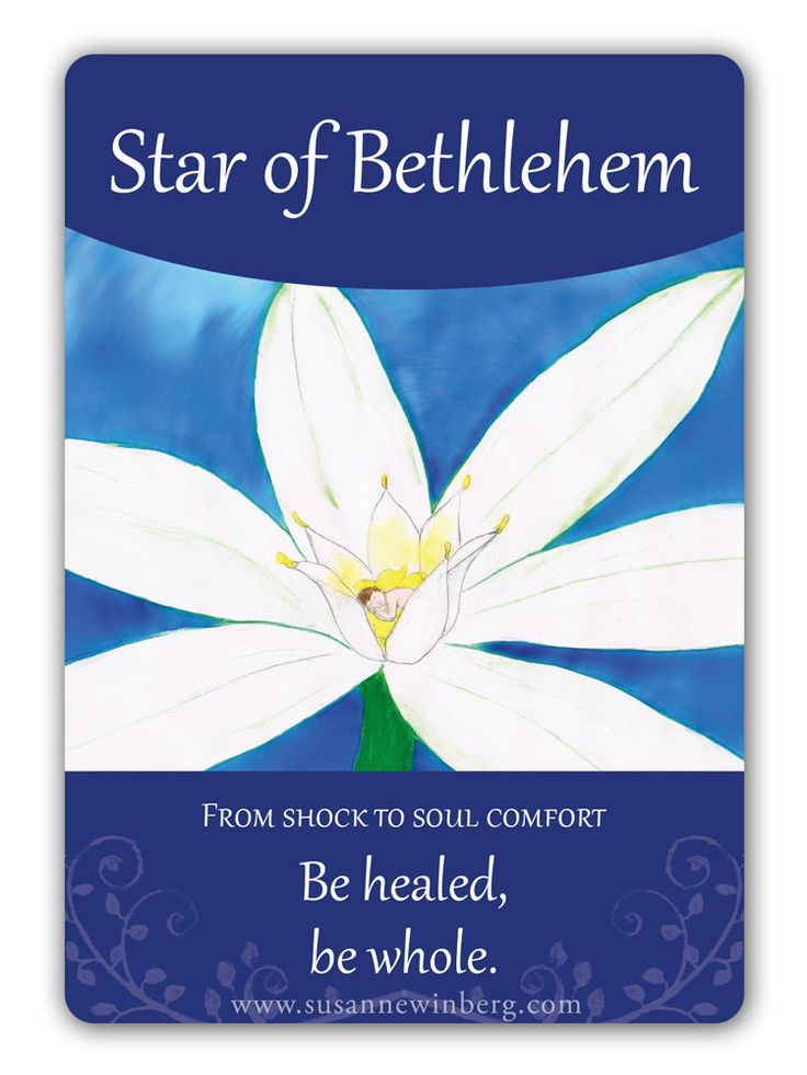 Star of Bethlehem - Bach Flower Oracle Card by Susanne Winberg. Message: Be healed, be whole.