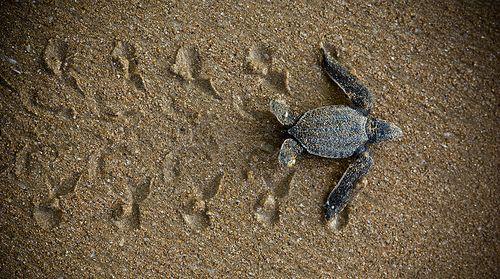Protect sea turtles!