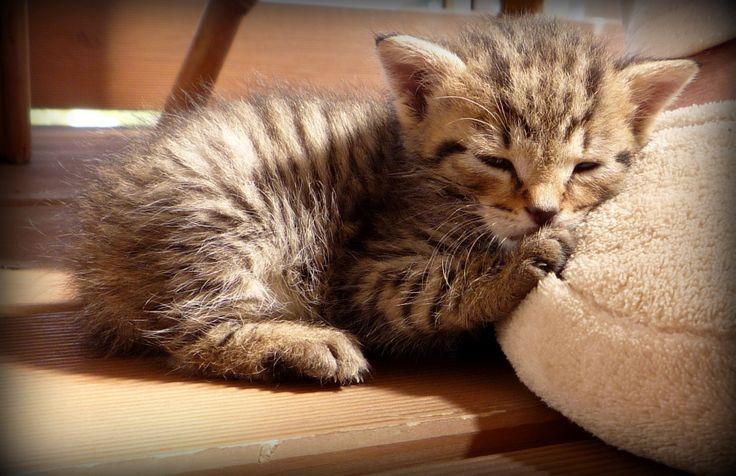 WELLSOFT Kitty