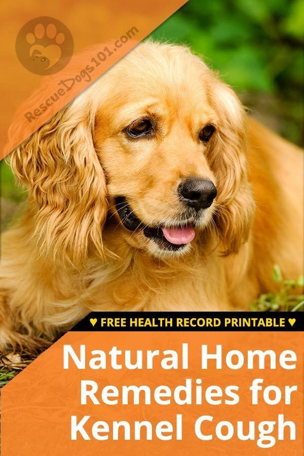 Natural Home Remedies For Kennel Cough Pets And Things Home