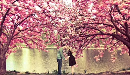 On the first of May in Czech Republic, lovers are supposed to kiss under a blossoming cherry tree to ensure a year of good health.