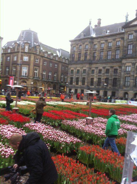 Tulpendag Amsterdam  www.vandijkbloemen.nl