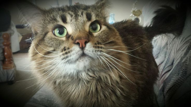 😍my Albus Severus #albusseverus #harrypotter #cats