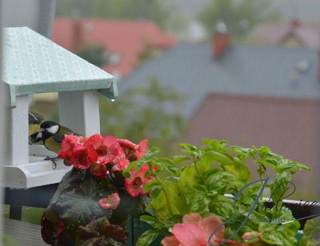 balkony, beards,Podwieczorek w deszczu, czyli sikorki w natarciu