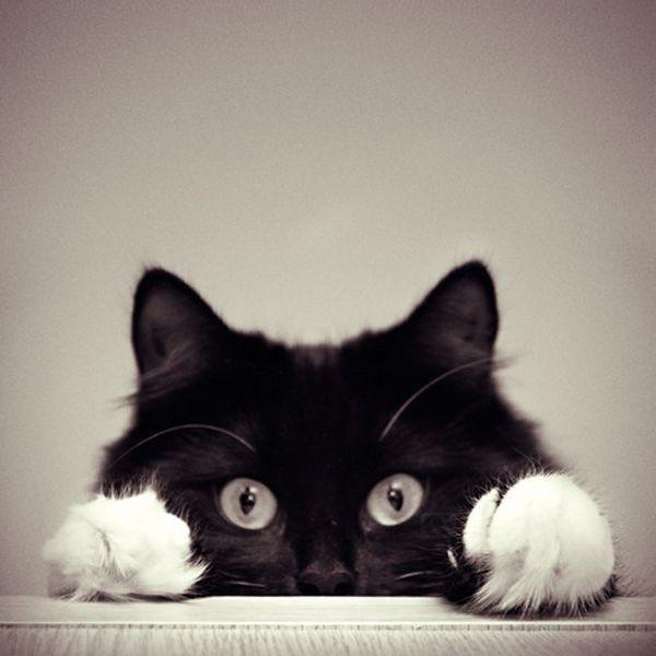Peek -a- boo