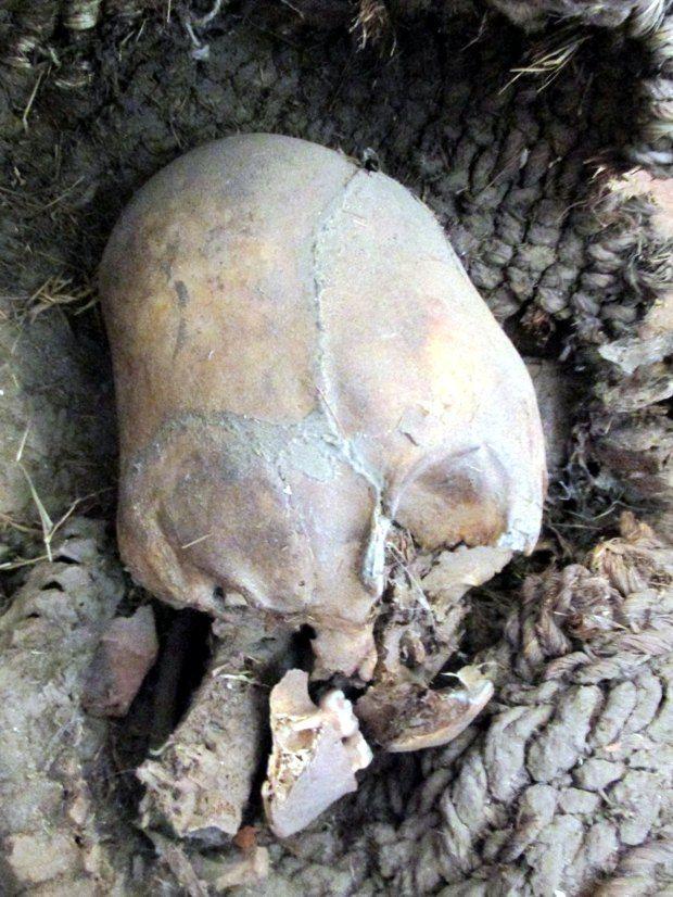 Anche se sono stati ritrovati praticamente il tutto il mondo, il Perù e la Bolivia dispongono di alcuni tra i più affascinanti crani allungati che l'archeologia tradizionale fatica a spiegare adegu...