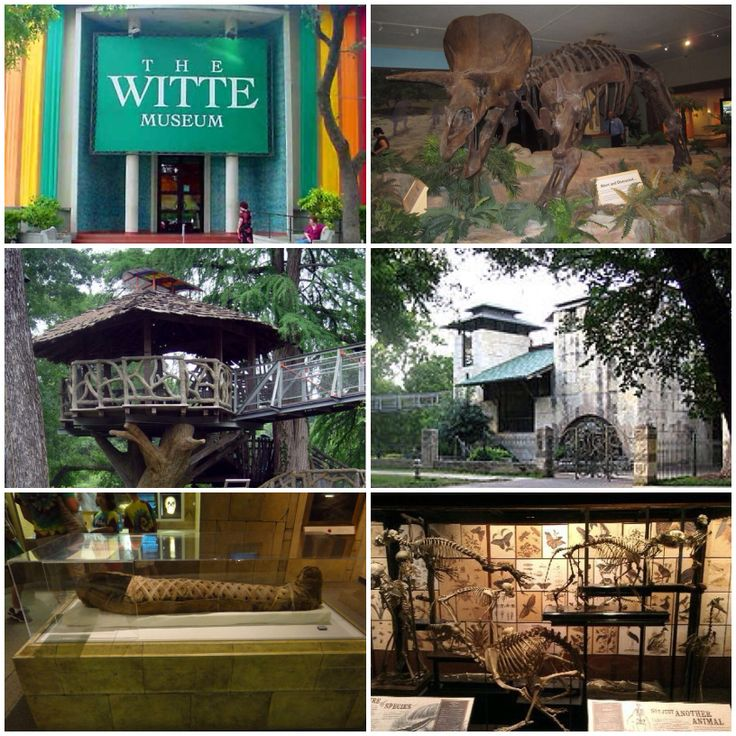 The Witte Museum, established in 1926 under the charter of the San Antonio Museum Association, is located adjacent to Brackenridge Park in Midtown San Antonio, Texas, USA, on the banks of the San Antonio River. It is dedicated to natural history, science and South Texas heritage.
