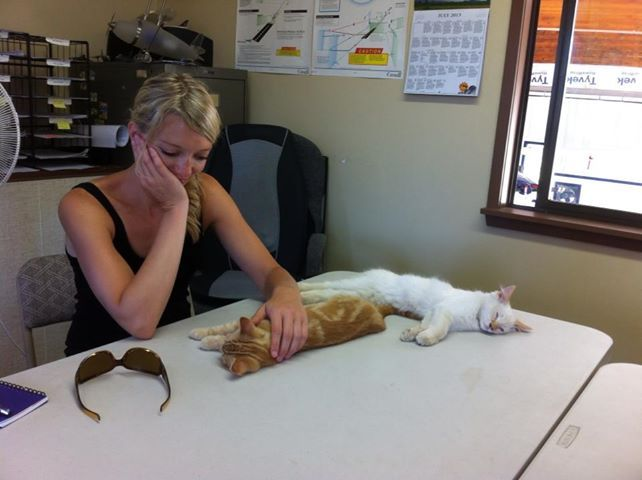Our new kitties getting into the groove of Ground School!