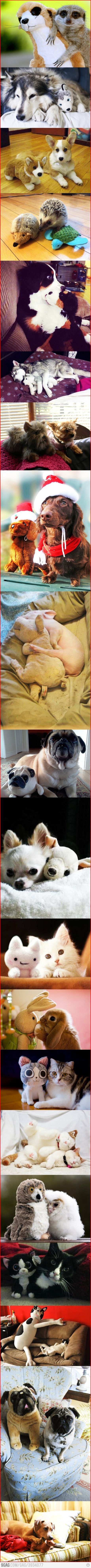 Animals with their stuffed animals!