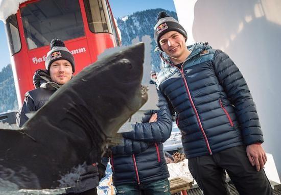 Max Verstappen gaat in 2017 op pad zonder haaienvin