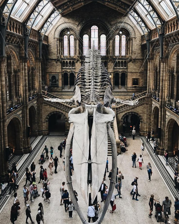"""Sarah C (@sarah_and_the_city) Instagram- """"London, The Natural History Museum now has a 126 year old blue whale skeleton taking centre stage"""""""