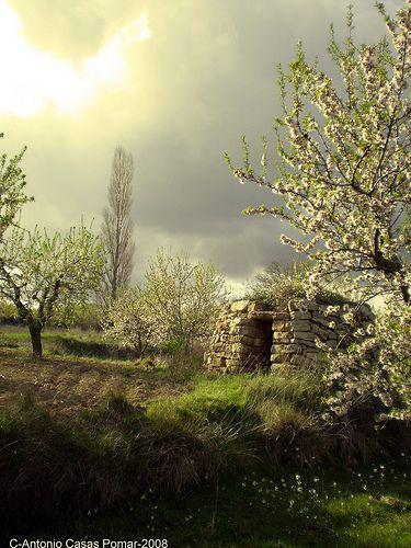 Cabaña de pastor (Vera de Moncayo)