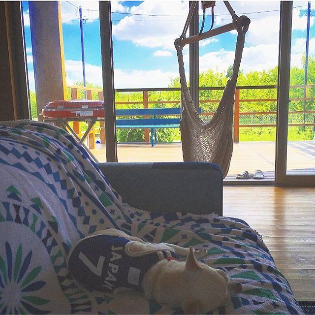 冷房嫌いのジル様🐕今日も窓全開です。 *  一階、二階の窓を全開にすると涼しい我が家🎐 *  昼間に冷房つけたのは今年1回だけ🎐 *  今日は風が強いから涼しい🎐 *  オリンピックももうすぐ終わっちゃうなぁ〜💨 *  頑張れ日本‼︎🇯🇵 *  #頑張れ日本  #japan🇯🇵 #リオオリンピック2016  #犬のいる暮らし  #スムチー  #チワワ部  #chihuahua #chihuahualove  #bessの家  #ワンダーデバイス  #フランクフェイス  #ハンモック  #ウッドデッキ  #リビング  #夏  #田舎暮らし  #スローライフ