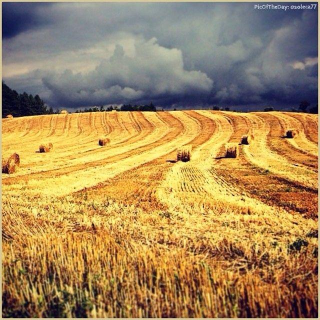 Balle di fieno in fuga dalla tempesta...  La #PicOfTheDay di #TurismoER oggi rientra di corsa dai campi di #grano di #MonteRomano, #Ravenna Complimenti e grazie a @soleca77   Hay bales on the run from the #storm...  Today's PicOfTheDay TurismoER comes back home in a hurry from the wheat's #fields of Monte Romano, Ravenna Congrats and thanks to @soleca77