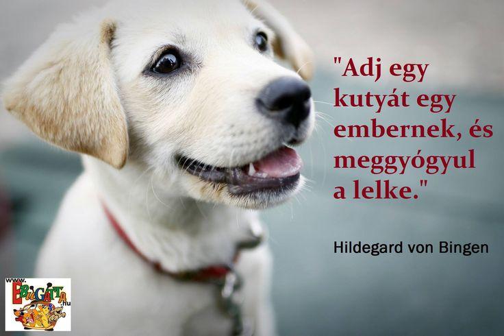 Bingeni Szent Hildegárd idézet a kutyákról. A kép forrása: Ebugatta