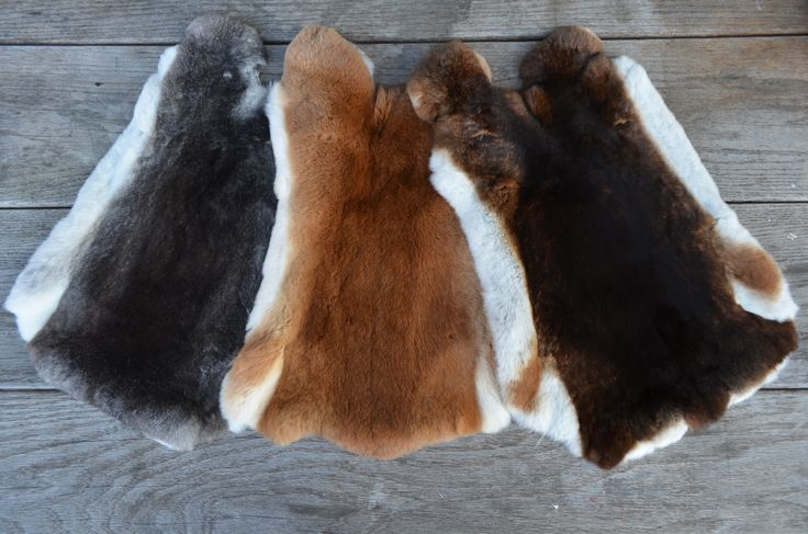 Our Rexcellence Rex furs.