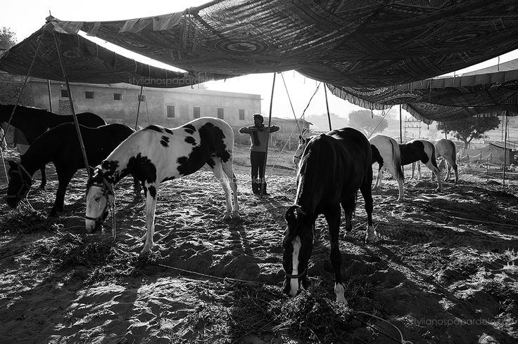 Stable. Pushkar, India.  see more here: http://www.stylianospapardelas.com/2108-stable-pushkar-india/   also at my facebook page  https://www.facebook.com/Stylianospapardelas