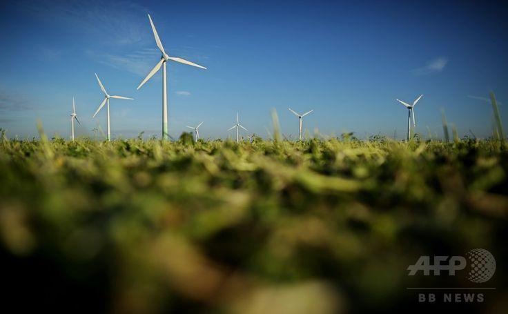 ドイツ・ザルシュテット(Sarstedt)の風力タービン(2012年11月13日撮影)。(c)AFP/JULIAN STRATENSCHULTE ▼29Jul2014AFP|エネルギー効率、ドイツが世界一 http://www.afpbb.com/articles/-/3021659 #Sarstedt
