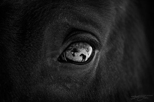 www.lacavalieremasquee.com / Equestrian Black & White Horses | Payton Adams