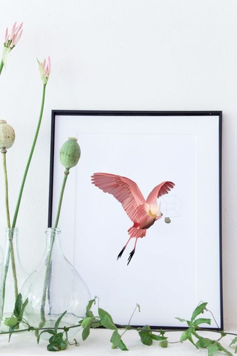 Spoonbill ster A3 NEW #poster #studiodewinkel