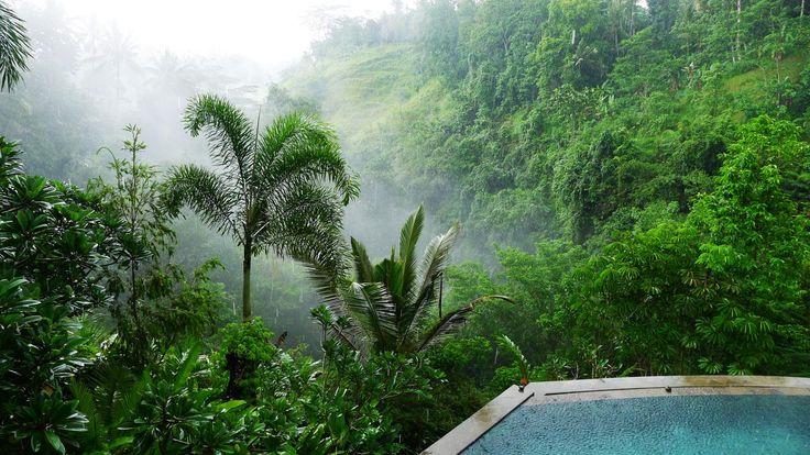 Villa Umah Shanti | 3 bedrooms | Ubud, Bali #swimmingpool #infinitypool #forest
