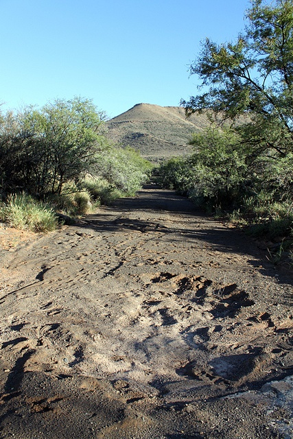 Dry riverbed, Karoo by flowcomm, via Flickr