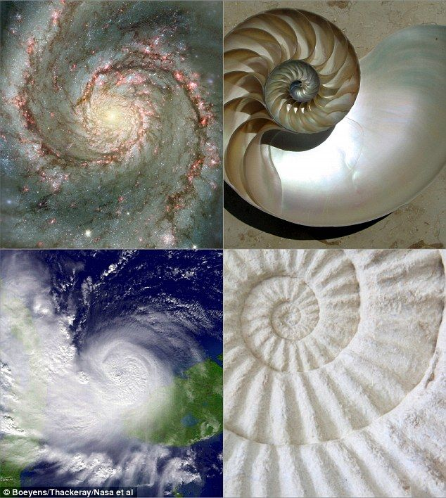 Is space-time shaped like a SPIRAL? Universe has a 'golden ratio' that keeps everything in order, researchers claim