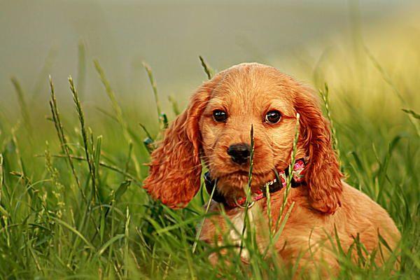 cute puppy in high grass