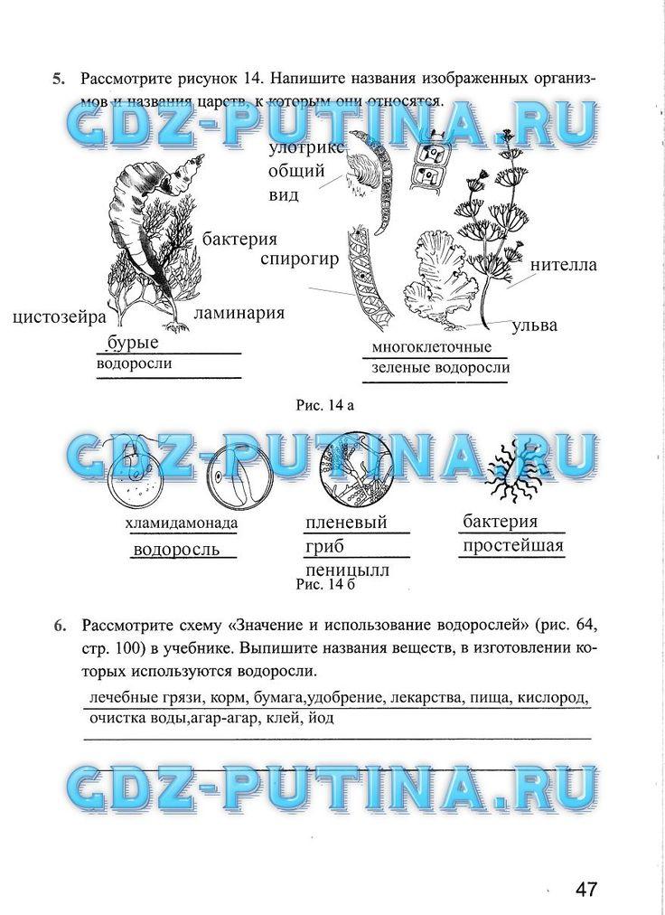 Гдз по ростовской области рабочая тетрадь 8 класс корнакова