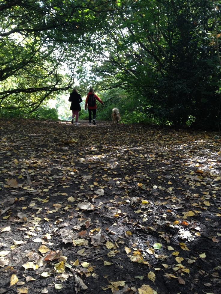 #London #Hampstead Heath #Walk