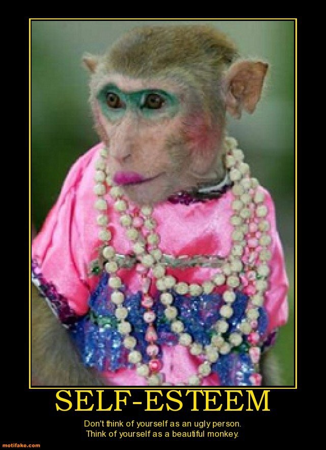 """27 best """"ANY MONKEY OFF THE STREET............. images on ..."""