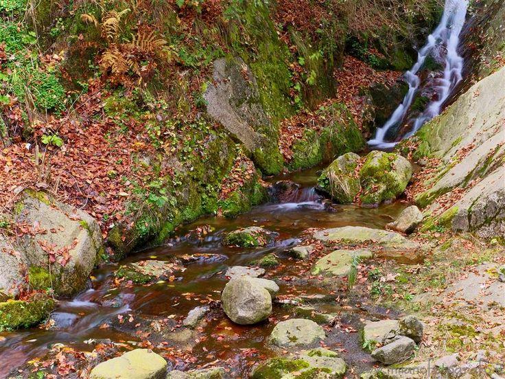 Campiglia / San Paolo Cervo (Biella, Italy) - Small stream in autumn