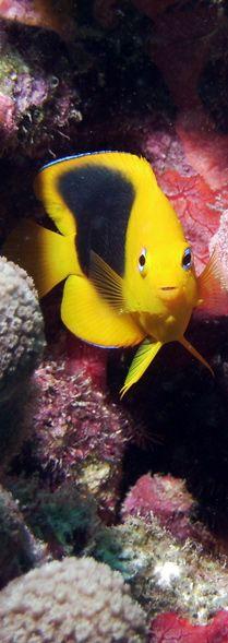 Images | Sealife Cameras