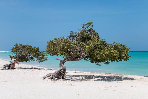 Neuer Artikel: Aruba - meine Trauminsel in der Karibik @arubatourism #aruba #karibik #reiseblog #reiseblogger
