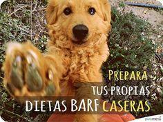 Una introducción para la realización de tus propias dietas BARF caseras paso a paso, dí no al pienso y haz tu propia comida natural cruda para perros y gatos!