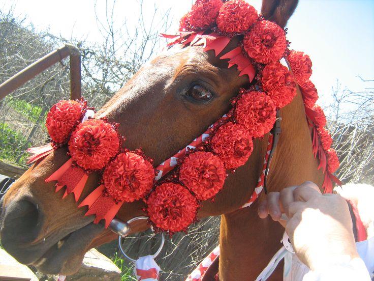 La bardatura dei cavalli, composta da coccarde di raso, interamente cucite a mano,  dalle sapienti mani di madri, mogli, fidanzate e donne di Sartiglia.