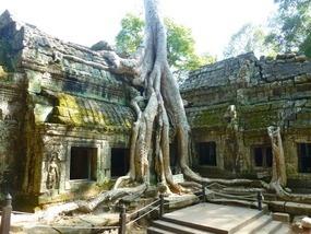 heading to... Banyan tree. Siem Reap, Cambodia
