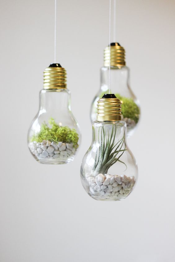 3 pack glass light bulb hanging terrariums planters