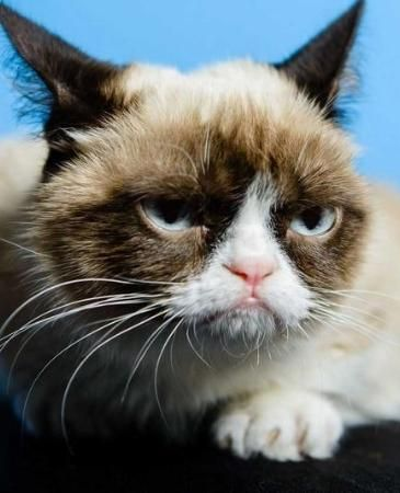 The Grumpy Cat meme provided some of the most searched viral content from 2013.
