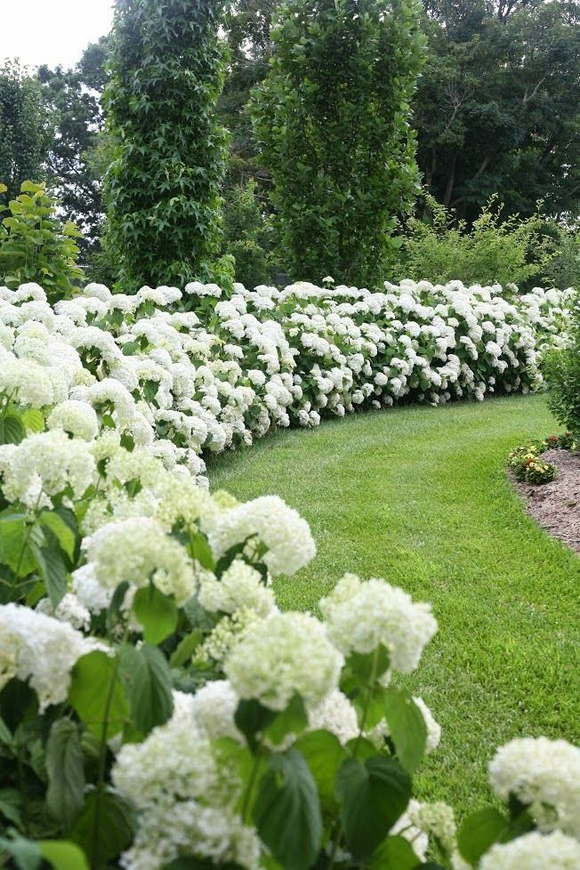 Hydrangea comes in a range of colours.  White is good to lighten dark areas and an easy backdrop for more colourful planting.