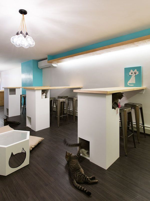 3 New York City Cat Cafe Meow Parlour Adoption Architecture Design In 2020 Cat Cafe Pet Cafe Kitty Cafe