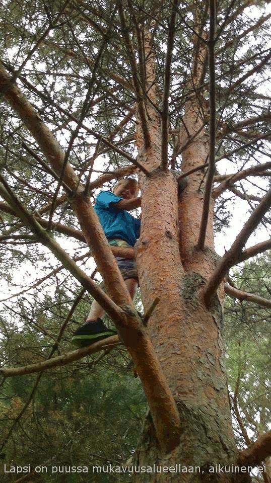 Millainen on mukavuusalueesi? Lähelle voi olla pitkä matka. Asiat voivat olla eri tavalla kuin puusta katsoen luulisi. Tässä tarinassa katsellaan metsää puusta, syödään sydämiä ja poron aivoja ja mukana menossa myös Henry Ford!