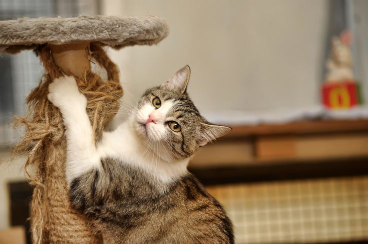 How to Stop Cats Scratching  Cats are fluffy and fun, but they do love to scratch. Here are some tips on how to keep your most prized pieces of furniture away from those claws.   http://naturalmedicine.co.za/index.php?option=com_content&view=article&id=13201:how-to-stop-cats-scratching&catid=2730&Itemid=179