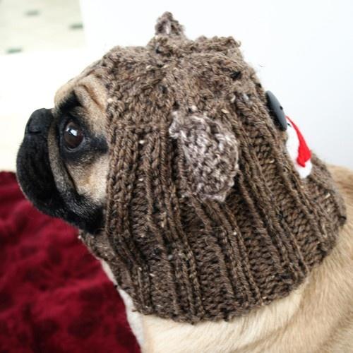 Pug Balaclava Knitting Pattern : 65 best images about Pugs Wearing Hats on Pinterest A ...