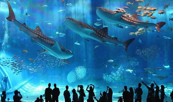 Eine Welt unter Wasser: das Hurghada Grand Aquarium
