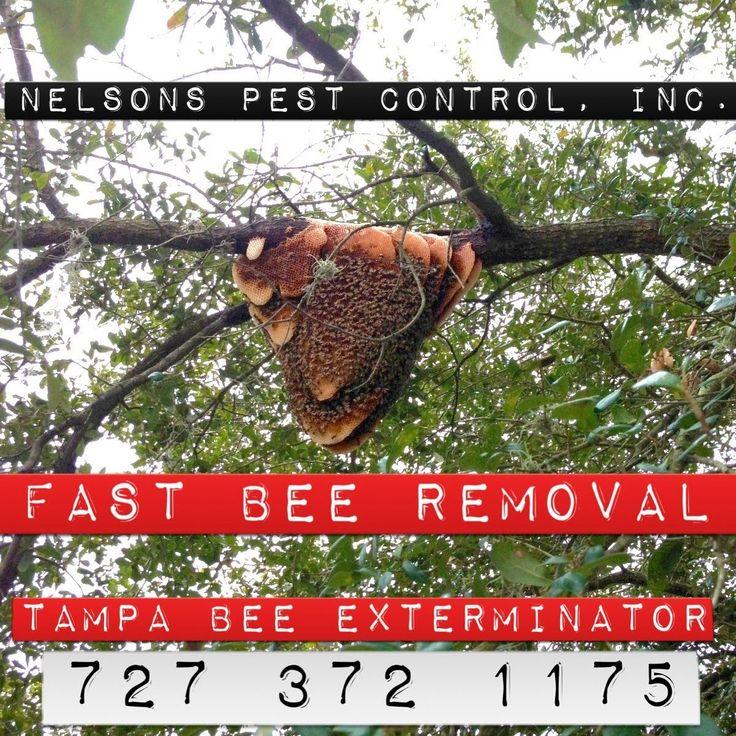 Reasonable Bee Exterminator Tampa Fl