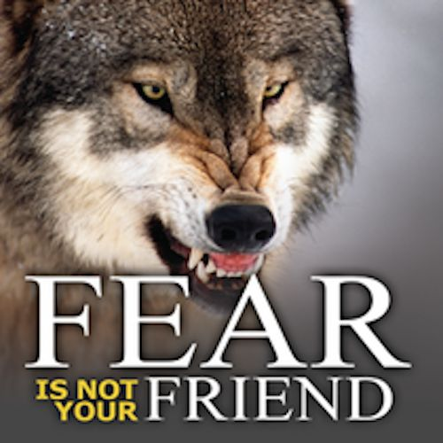 DVD_Fear-Is-Not-Your-Friend_Thumb