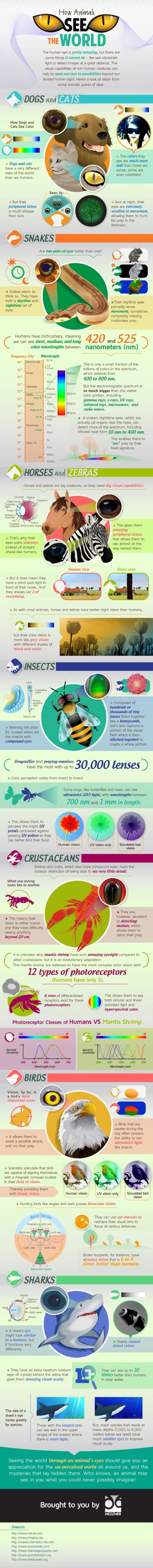"Hm..ever wonder how you look to your dog or cat? Or to a shark as he swims towards you? Well have no fear, all your answers to questions about what animals see are here in the"" What Animals See the World"" infographic from Mezzmer!"